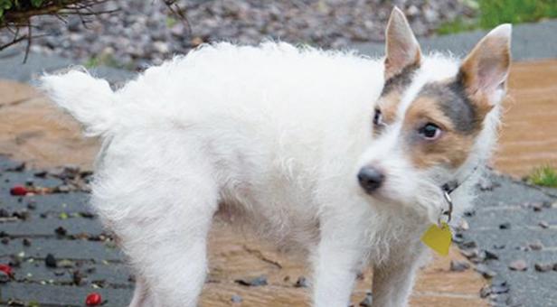 Lola-the-dog
