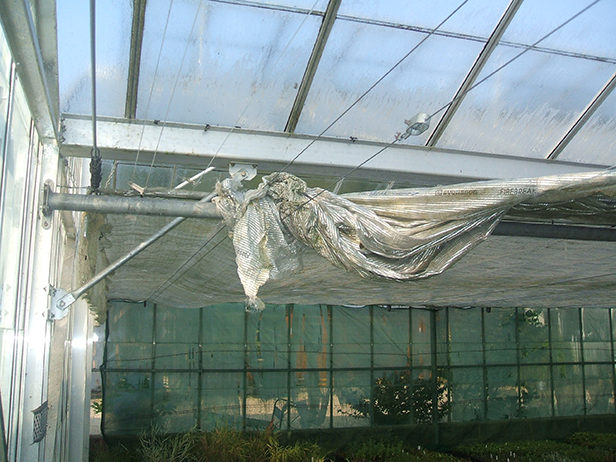 Greenhouse shading screens at Cherry Tree Nursery, twisted and broken