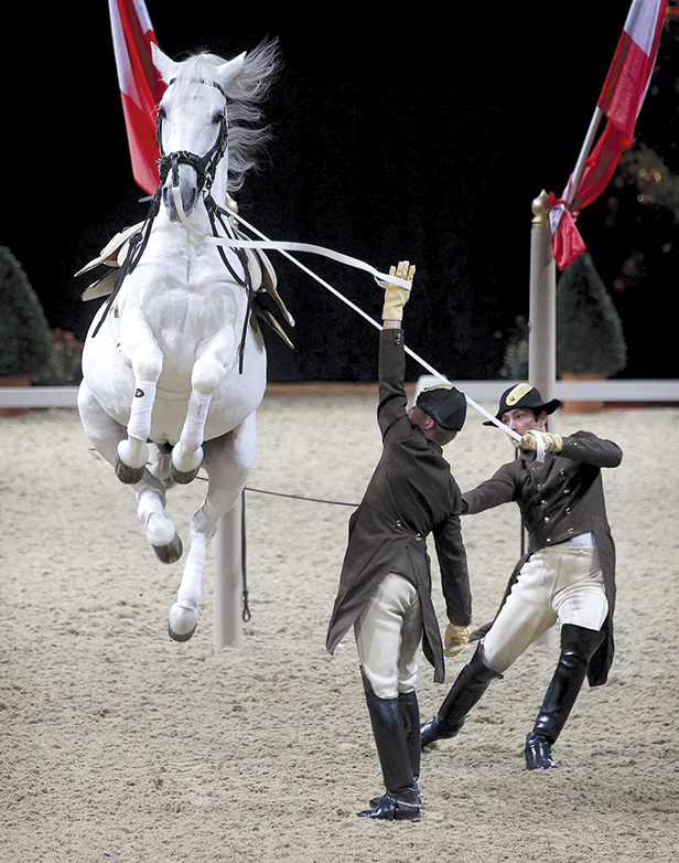 Spanish Riding School of Vienna display