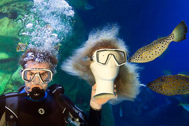 Filefish nibble away at blonde wig