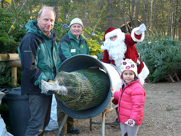 Forestry Commission Rangers wrap up a Christmas tree at Moors Valley Country Park for Bournemouth's Aleia Mountassir - with a little help from Santa