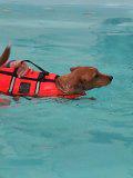 Milo swimming