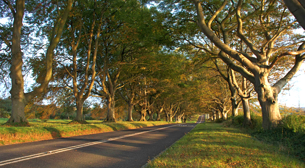 The Beech Avenue at Kingston Lacy © National Trust
