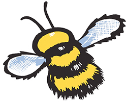 Haskins-Bee