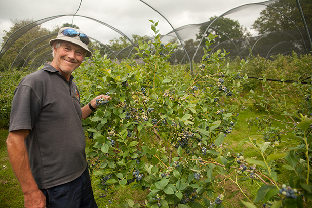 Jeremy Trehane with blueberry crop