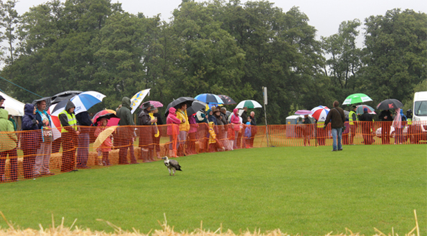 Brolly good show