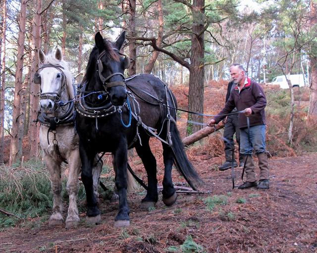 27-Jan-Horses-2