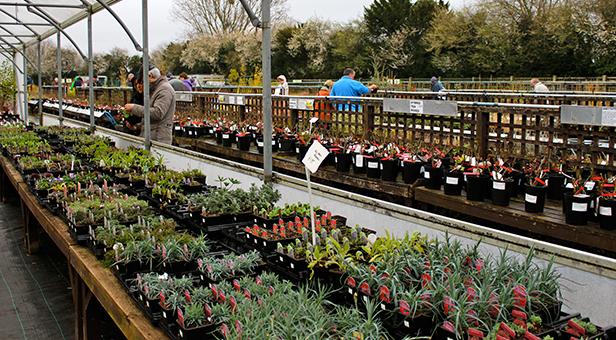 Cherry Tree Nursery plant sale