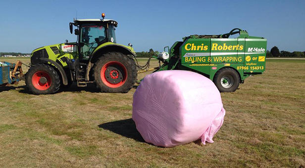 Pink haylage bales