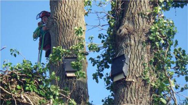 Bat boxes at Wick
