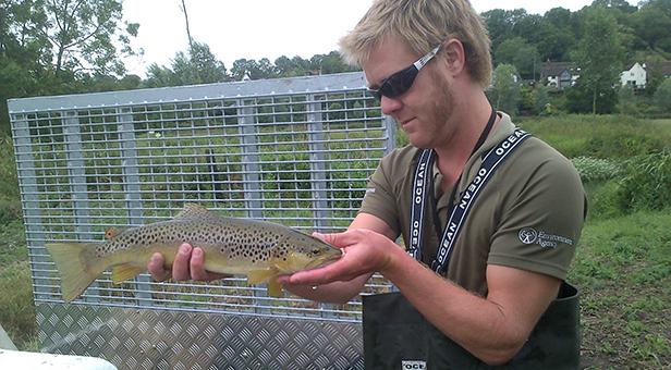 River Tarrant fish rescue