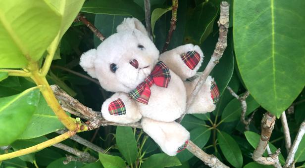 Missing-Bear