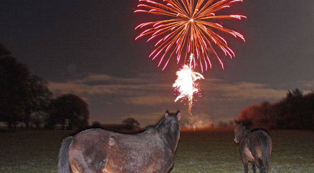 Fireworks-distressing-ponies