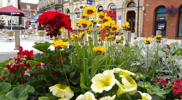 Wimborne-in-bloom