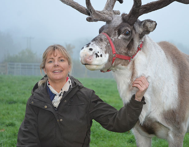 Santa and reindeer at Stewarts Garden Centres