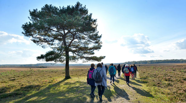 Walkers enjoy a stroll near Beaulieu Road during the New Forest Walking Festival 2015.