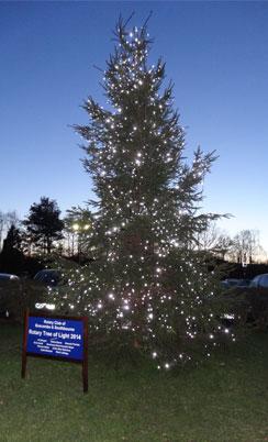 The 2014 Tree of Lights