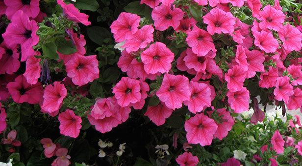 Wimborne in Bloom
