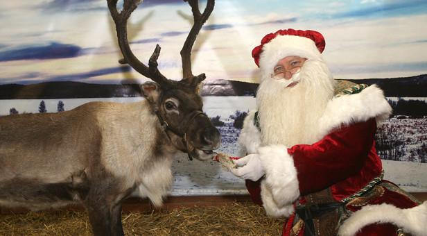 Santa-Reindeer-Stewarts