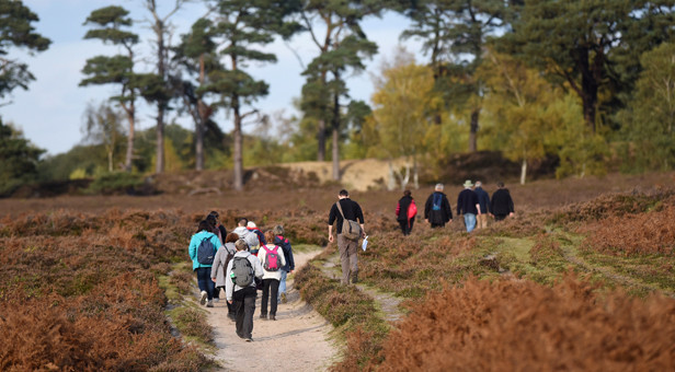 A guided walk through heathland near Beaulieu Road in the New Forest