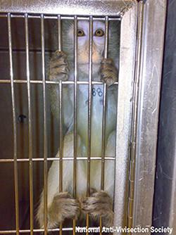 World-Day-for-Laboratory-Animals-Post