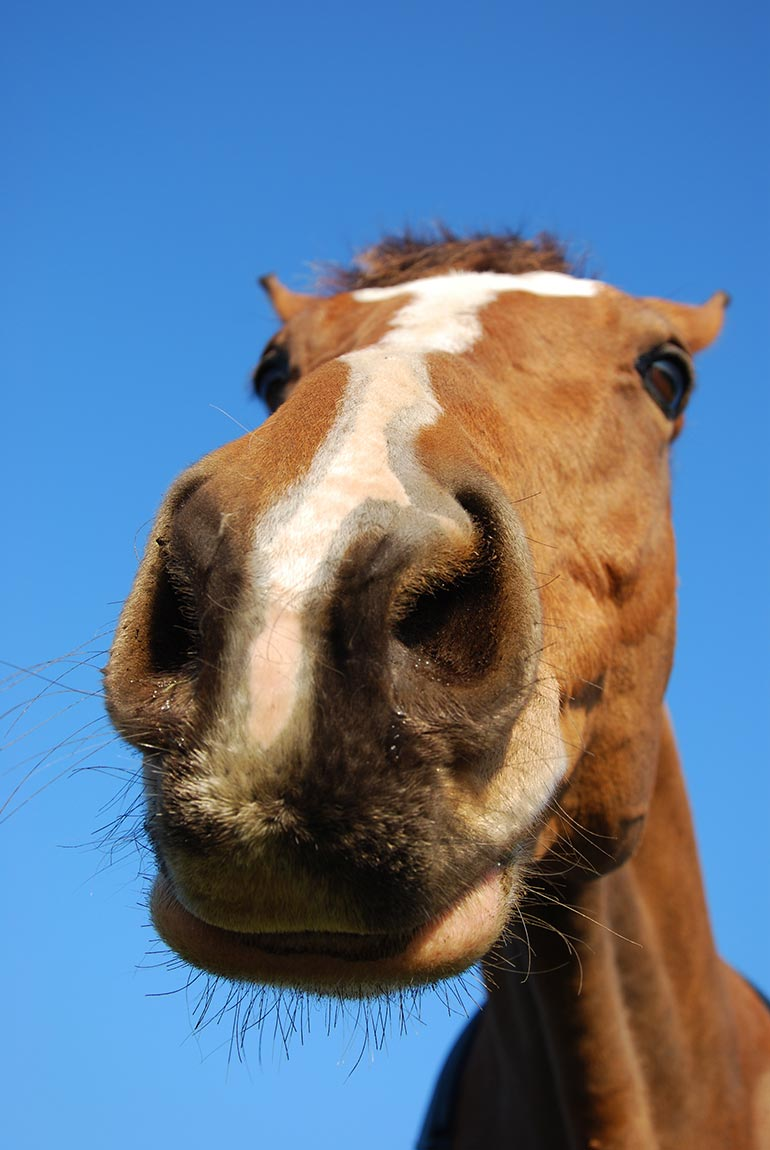 Muzzle pic (c) The British Horse Society