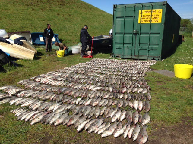 Illegal fishing in Christchurch
