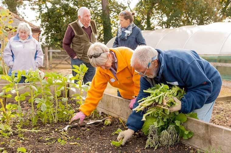 Wimborne based gardening group