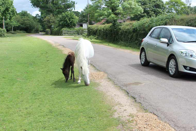 Watch out for New Forest animals this winter!