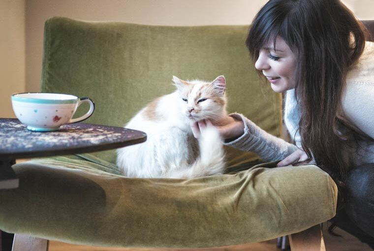 First cat cafe in the South to be located in Bournemouth: Jaya and Rooney