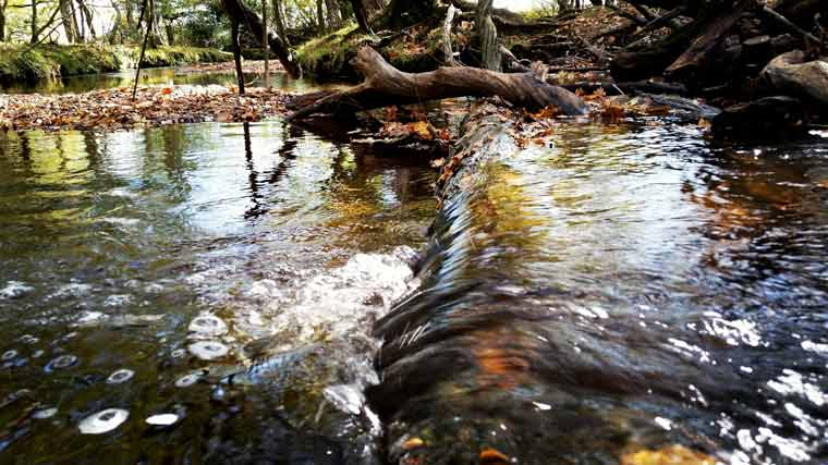 'Water's edge' by Hannah Burrows – the vote winner of the autumn 2016 edition of the New Forest National Park Authority's Seasonal Snaps photo competition.