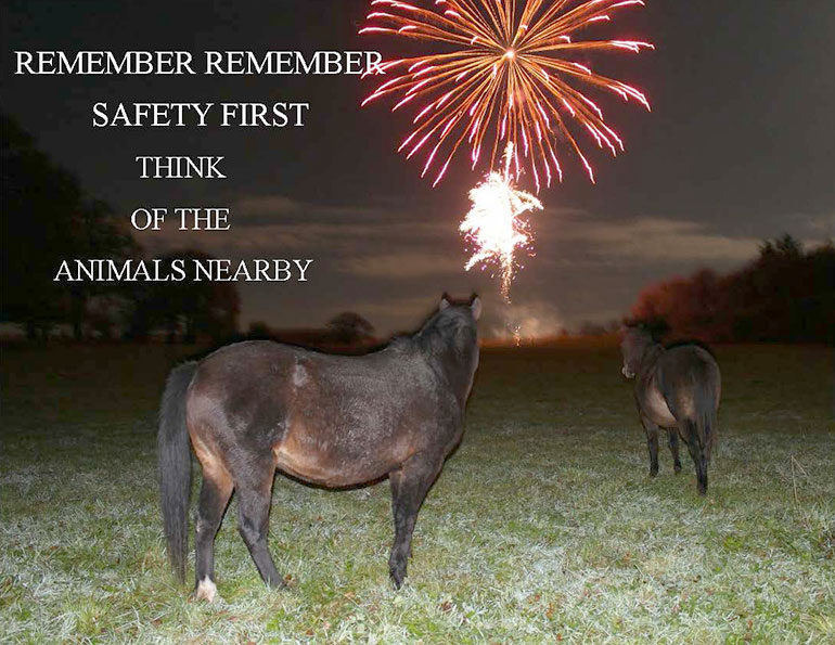 New Forest ponies watching fireworks