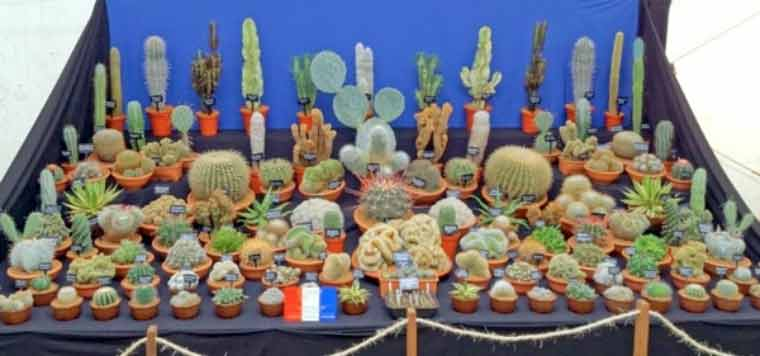 Dorchester Agricultural Society gets prickly