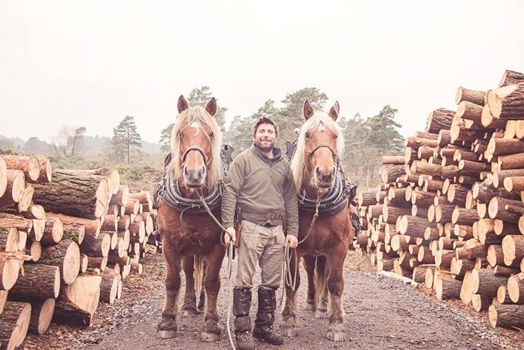 Horse logging at Highcliffe Castle