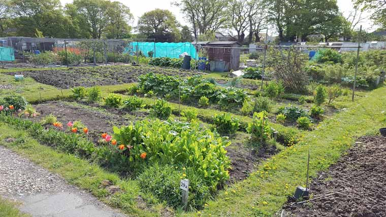 Allotments available in Christchurch