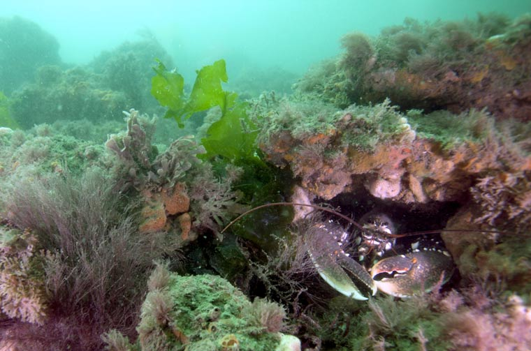 Byelaw further protects marine wildlife on Dorset's coast