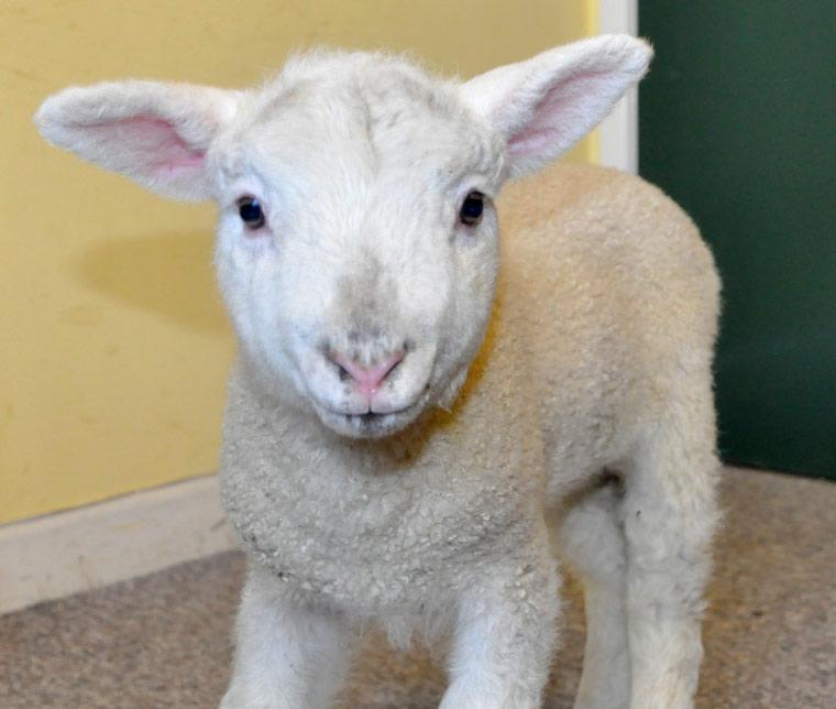 Can ewe name the Cranborne Chase AONB mini mascot?