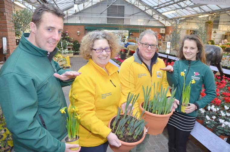 Stewarts in Christchurch is on the lookout for the tallest daffodil
