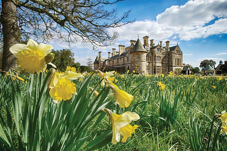 Beaulieu Palace House daffodils