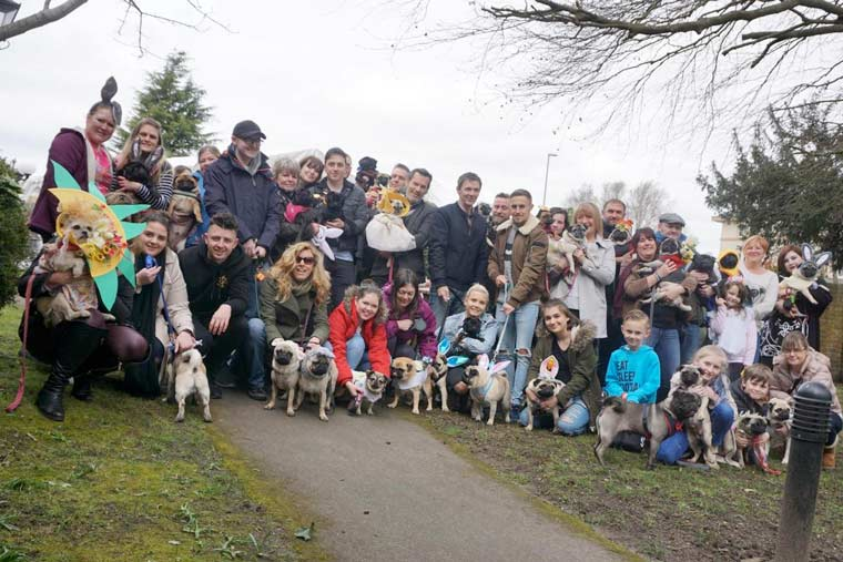 Easter Pug Parade in Wimborne