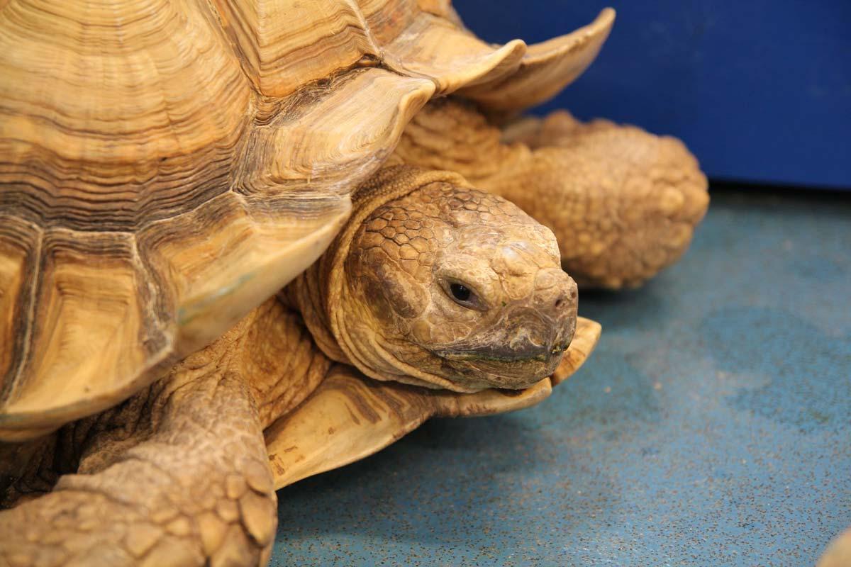 2018-08-24-Tortoise