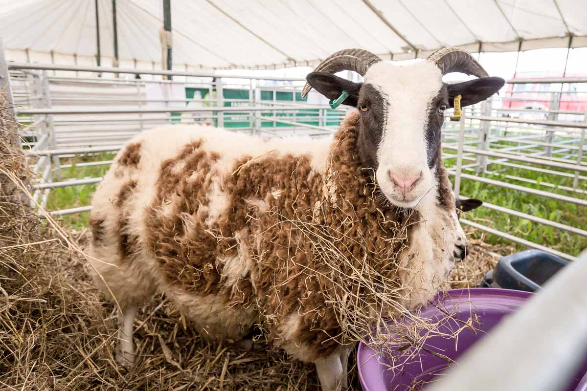 Dorset County Show 2018 welcomes more than 55,000 visitors