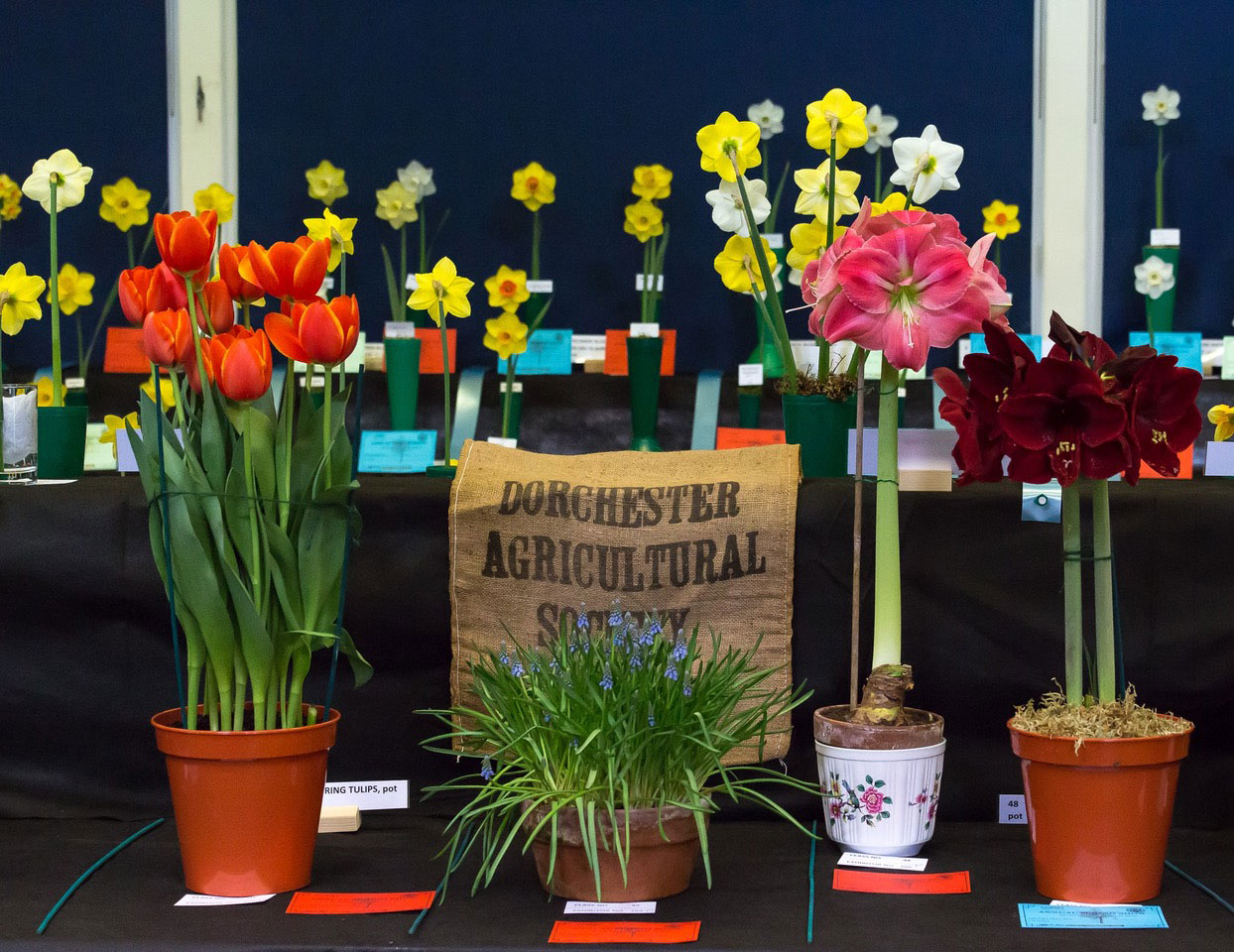 Dorchester Agricultural Society Spring Show
