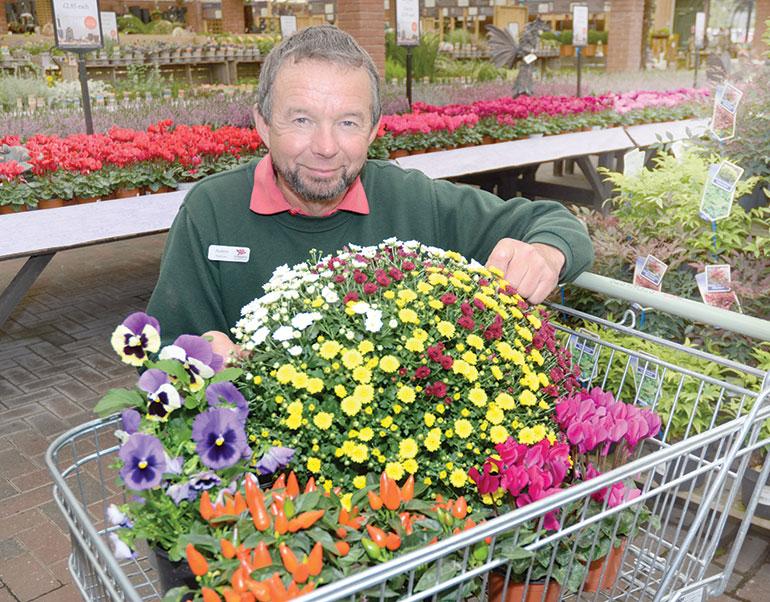 Autumn flowers at Stewarts Garden Centre