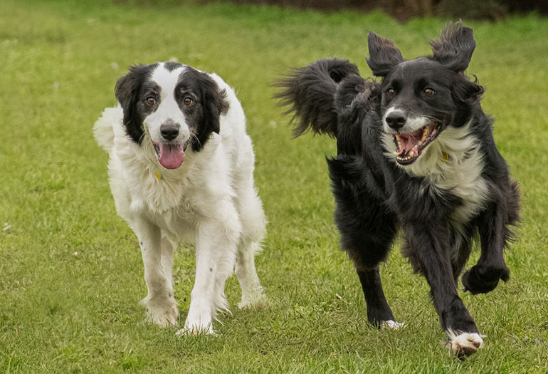 Tinker & Smudge Waggy Tails