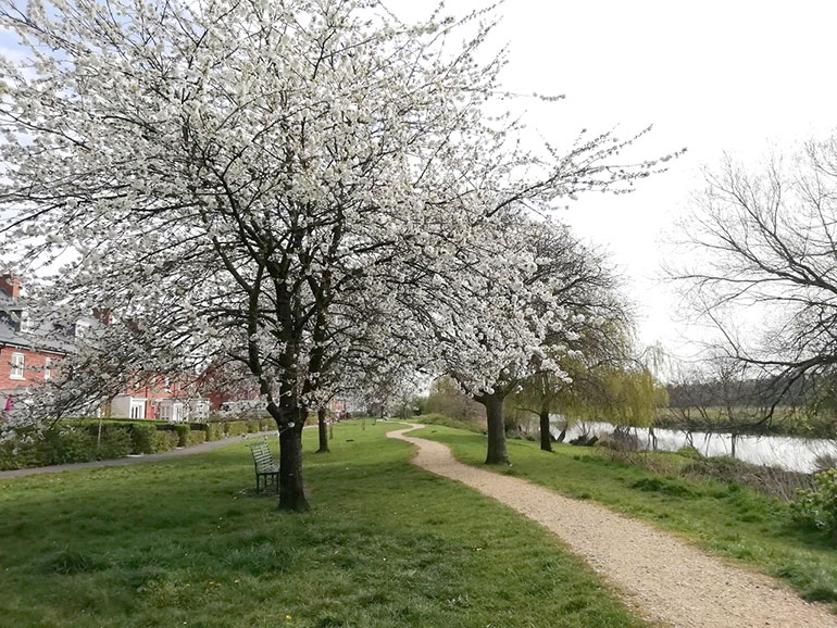 River Stour in Wimborne