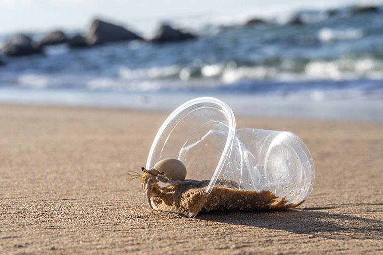 Hermit crab in plastic cup