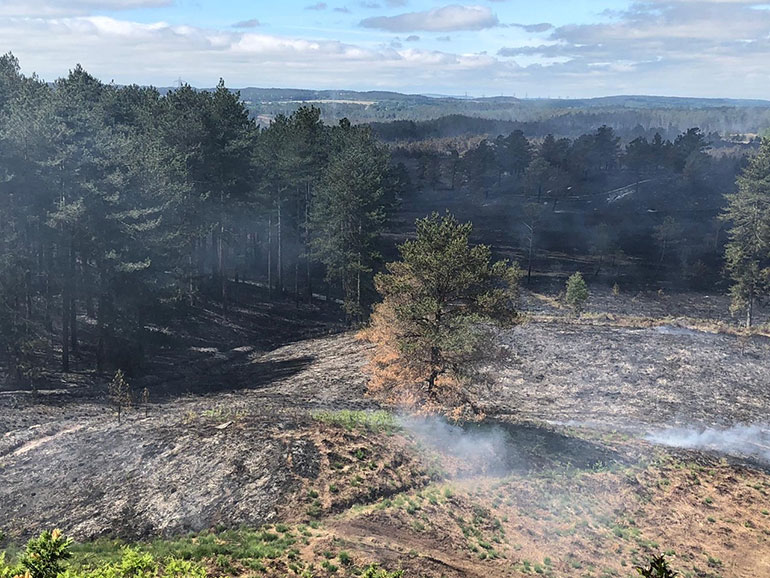 Devastating scene at Wareham Forest are courtesy of Dorset & Wiltshire Fire and Rescue Service