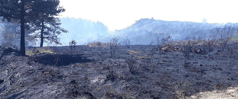 Photograph courtesy Forestry England showing fire damage