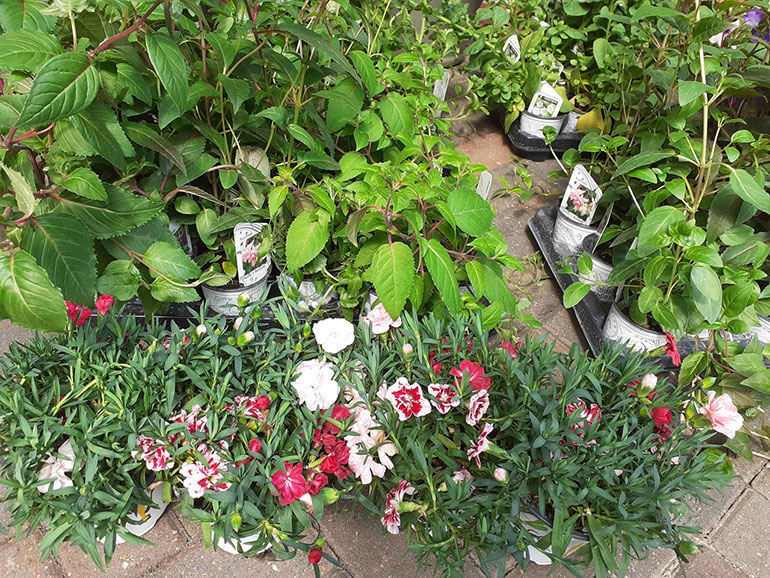 Plants donated to Lewis-Manning Hospice Care by Stewarts Garden Centre